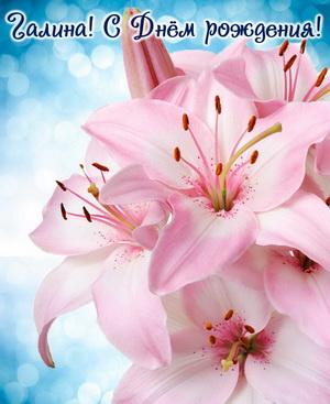 Красивые розовые цветы Галине на День рождения