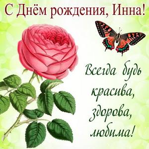 Картинка с бабочкой над розой