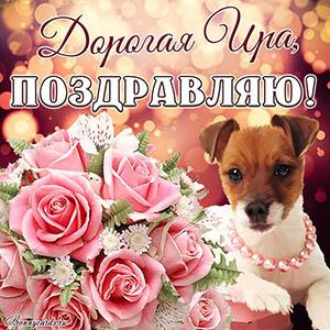 Открытка с поздравлением дорогой Ире с розами и собакой