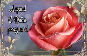 Красная роза Ларисе на День Рождения.
