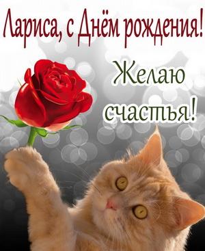 Рыжий котик с розой желает счастья
