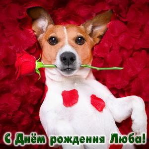 Собачка с розой на красных лепестках