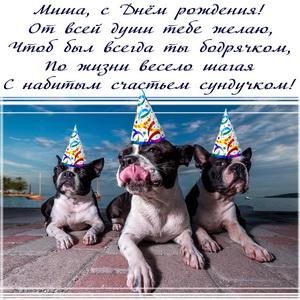Милые пёсики в колпаках поздравляют Мишу с Днём рождения