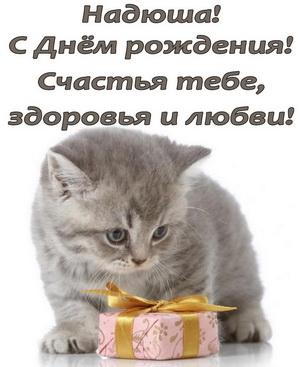 Красивый серый котик поздравляет Надю с Днем Рождения