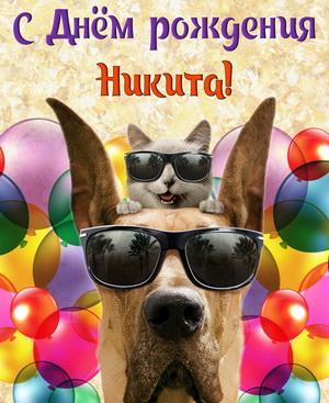 Забавные животные поздравляют Никиту с Днём рождения