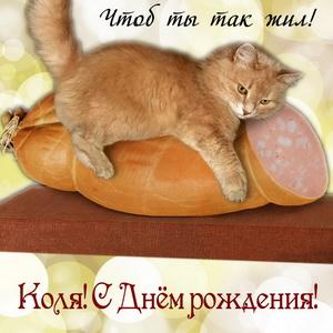 Забавная открытка Коле на День рождения с котиком