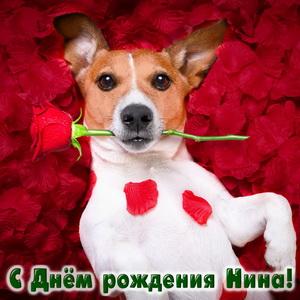 Картинка с собачкой и розой на День рождения