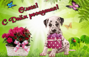 Собачка с подарком и корзина с розами.