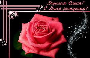 Большая красная роза для Олеси на темном фоне.