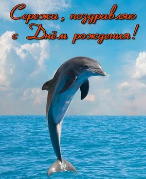 Открытка с дельфином Сереже на День рождения