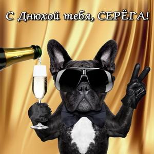 Открытка на днюху Серёге с забавной собакой в очках