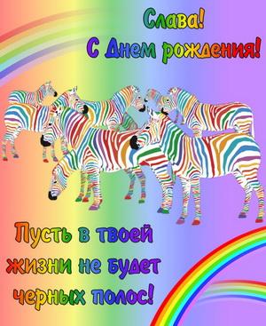 Картинка Славе на День рождения с забавными зебрами