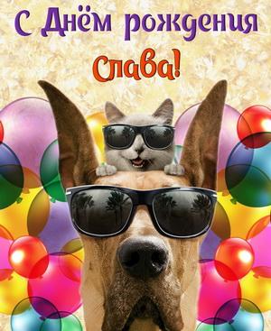 Открытка на День рождения Славе с забавными животными