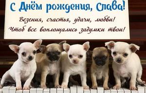 Открытка для Славы с забавными собачками на пианино