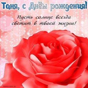 Открытка с яркой красной розой на День рождения Тане