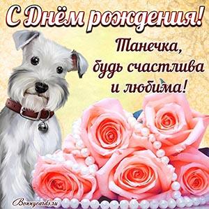 Картинка на День рождения Танечке с собачкой и розами