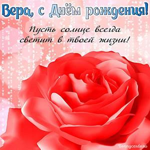 Открытка с огромной красной розой Вере на День рождения