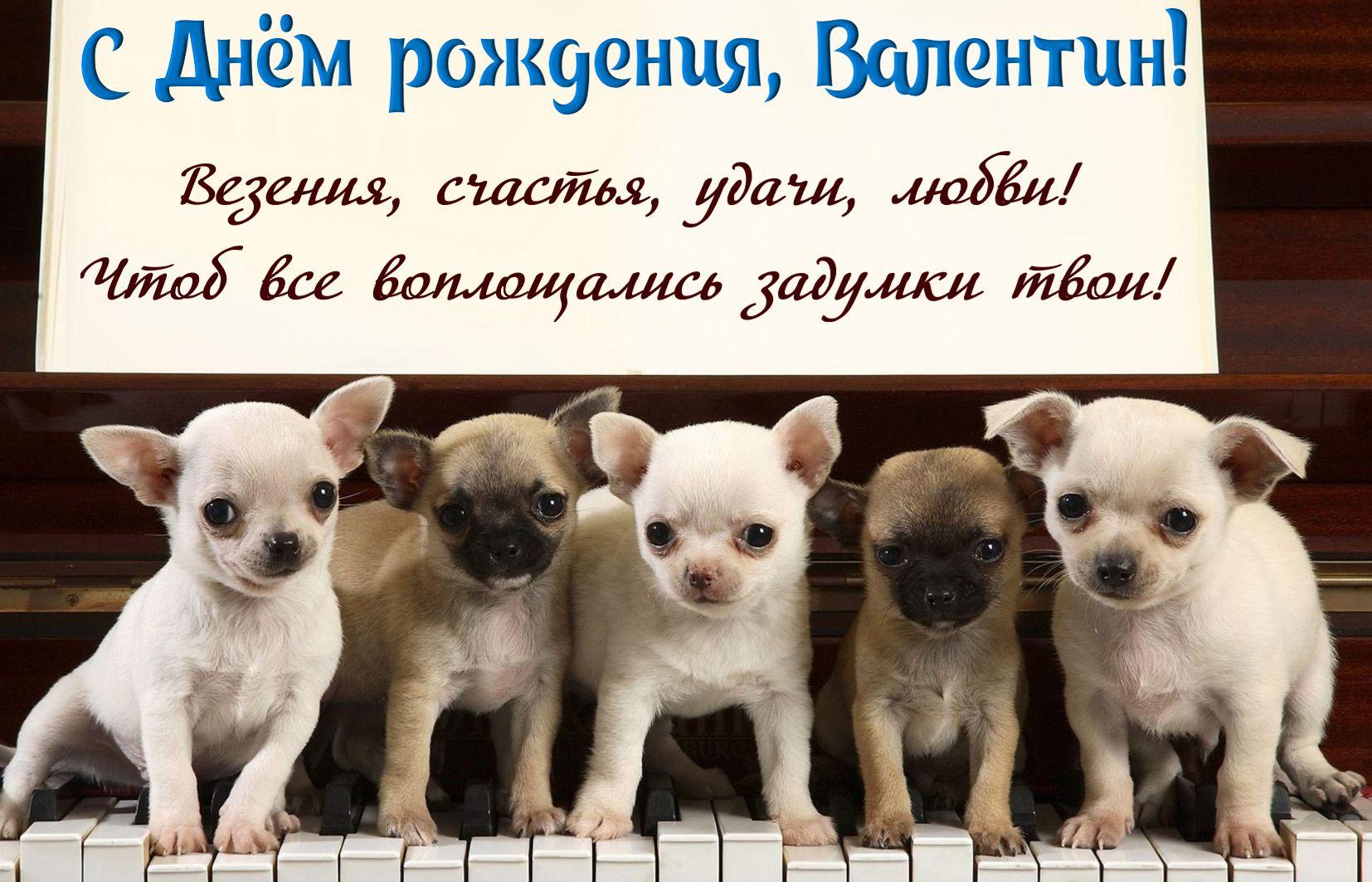 Открытка на День рождения Валентину - милые собачки на клавишах пианино