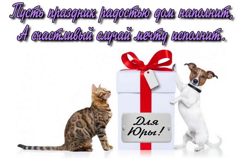 С днём рождения, собака и кошка с подарком Юре