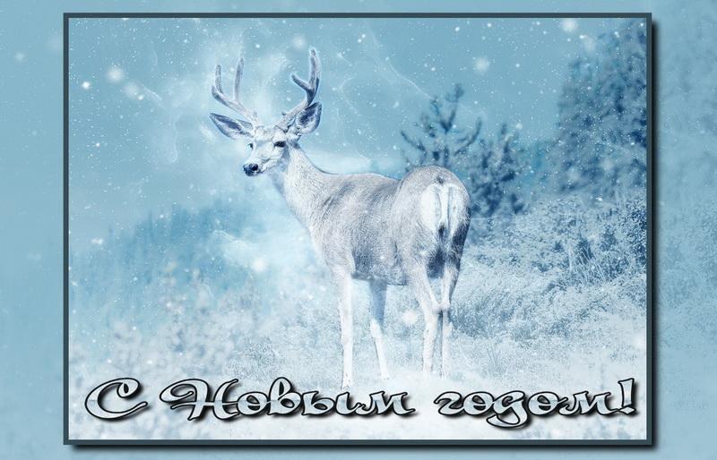 Новогодняя открытка - олень в заснеженном зимнем лесу
