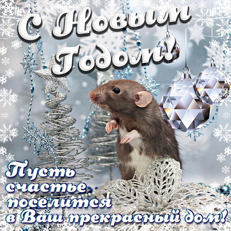 милые поздравления с годом крысы барсукова уже