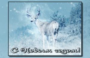 Олень в заснеженном зимнем лесу