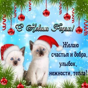 Милые котята поздравляют с Новым годом