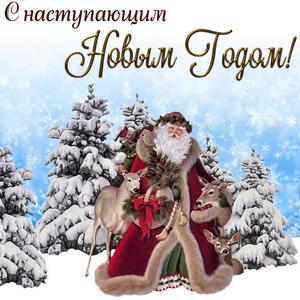 Картинка с Дедом Морозом среди заснеженных ёлочек