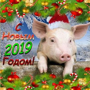 Открытка со свиньей на Новый 2019 год