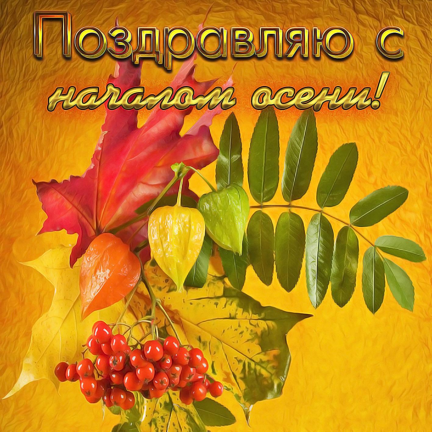 Картинка с листьями на красивом фоне на первый день осени