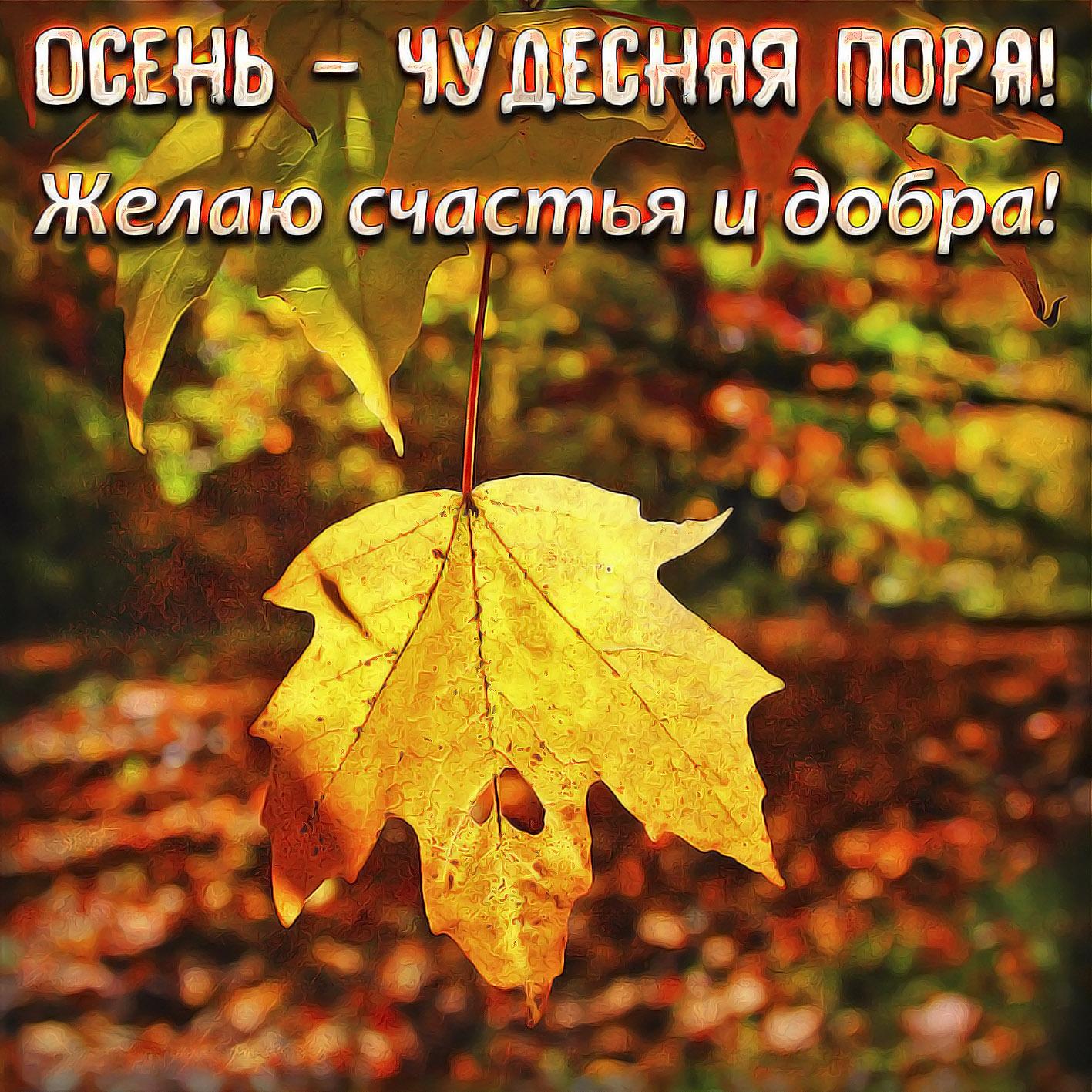 Картинка с жёлтым кленовым листиком на первый день осени