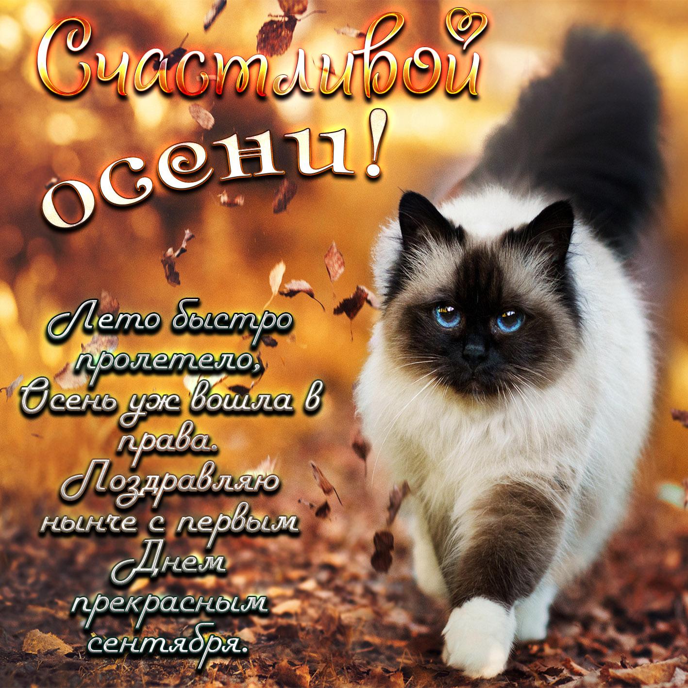 Открытка с котиком и пожеланием на первый день осени