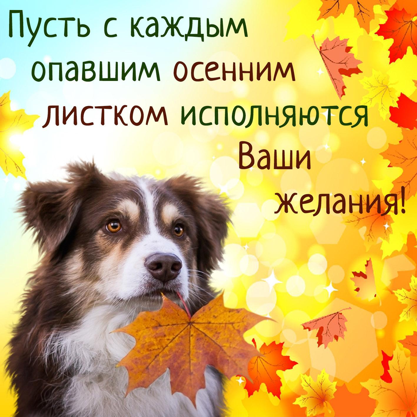Год, открытки с хорошим настроением на весь день осень