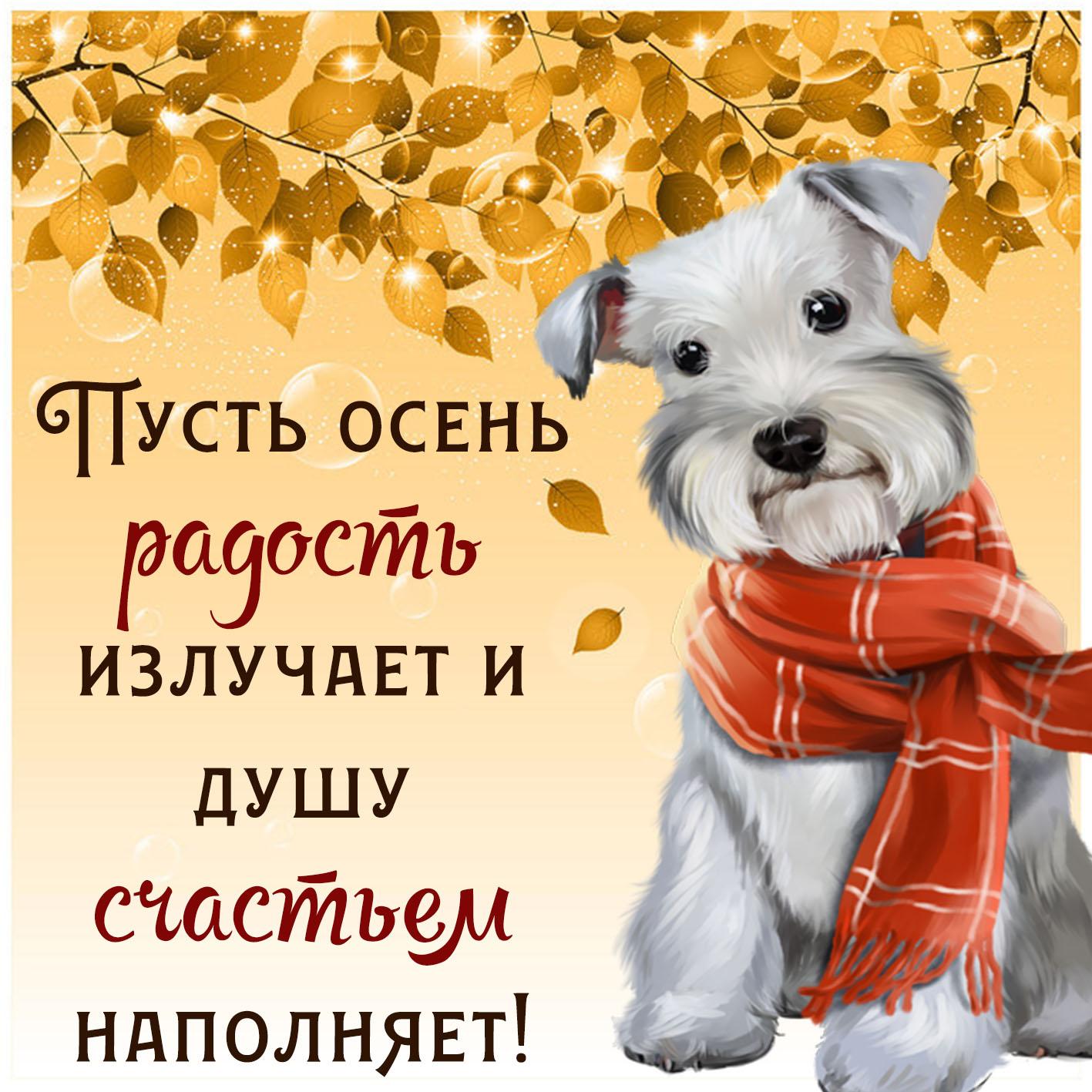 Открытка с пожеланием на осень - собачка в шарфике на красивом фоне