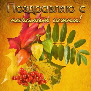 Картинка с листьями на красивом фоне