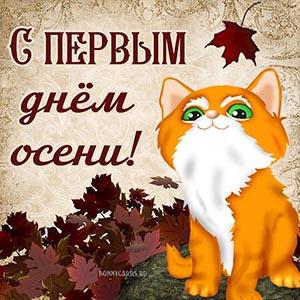 Котик с кленовыми листьями на первый день осени