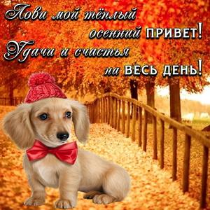 Милая собачка на красивом осеннем фоне