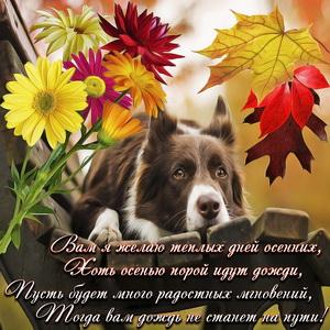 Собачка осенью на скамейке и пожелание