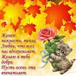 Картинка с котёнком среди кленовых листьев