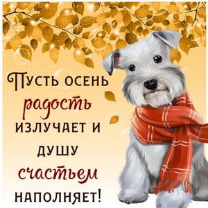 Собачка в шарфике на красивом фоне