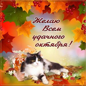 Открытка с котиком и пожеланием удачного октября
