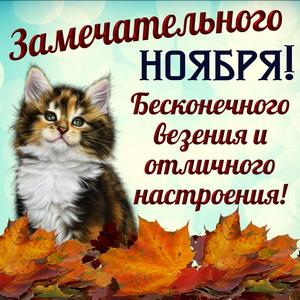 Открытка с котиком желающим замечательного ноября