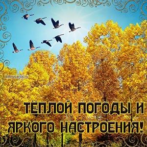 Тёплой погоды на осенней открытке с птицами и деревьями