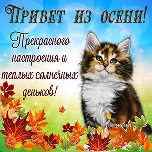 Милая картинка привет из осени с котёнком и листьями
