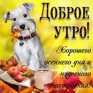 Пожелание доброго осеннего утра с собакой и яблоками