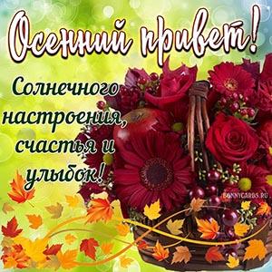 Осенний привет на фоне цветов и кленовых листьев