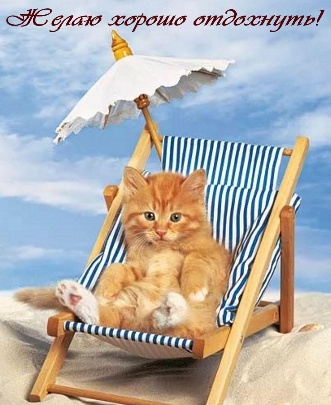 Котенок в шезлонге желает хорошо отдохнуть