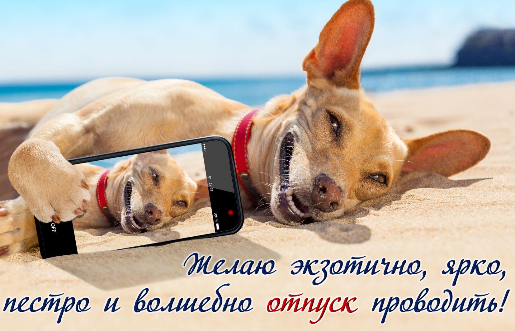 Открытка к отпуску - собачка со смартфоном на белом песке