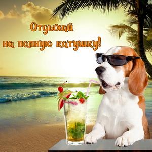Собачка в очках с коктейлем у моря