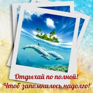 Открытка с дельфинами на фоне острова